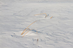 Замороженное река с сухой тросточкой на острове Стоковое фото RF