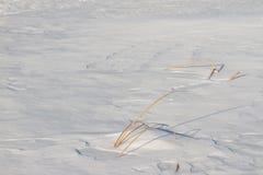 Замороженное река с сухой тросточкой на острове Стоковые Изображения RF