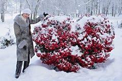 замороженное сердце Стоковые Изображения RF