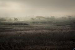 замороженное утро Стоковые Фотографии RF
