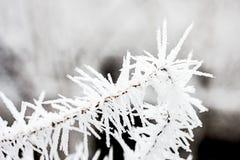 замороженность Стоковая Фотография
