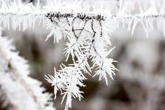 замороженность Стоковое Изображение