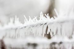 замороженность Стоковые Изображения