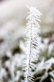 замороженность Стоковое Изображение RF