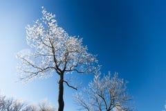 Замороженные ветви вала Стоковые Изображения