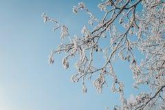 Замороженные ветви дерева против голубого неба стоковые изображения rf