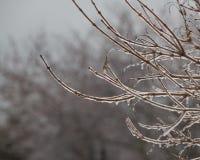 Замороженные ветви дерева с предпосылкой сосулек Стоковые Фото