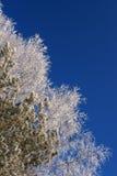замороженные ветви стоковое изображение rf