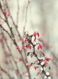 Замороженные ветви Стоковые Изображения
