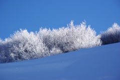 замороженные ветви Стоковое фото RF