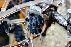 замороженные виноградины Стоковые Фото