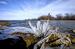 замороженные волны Стоковая Фотография RF