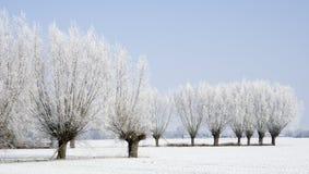 Замороженные деревья вербы стоковое изображение
