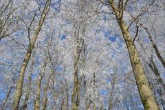 Замороженные деревья Стоковое фото RF