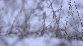 Замороженные заводы в поле siberian зима Для предпосылки акции видеоматериалы