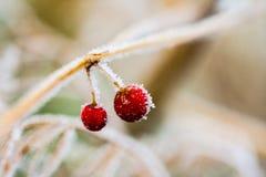 Замороженные заводы и листья с spiderwebs Стоковые Изображения