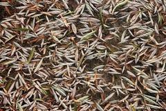 Замороженные листья вербы на льде Стоковое фото RF