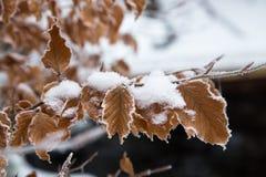 Замороженные листья в снеге Стоковые Фотографии RF