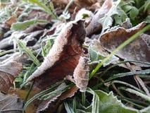 Замороженные листья и трава стоковая фотография rf