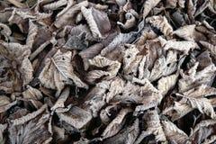 Замороженные листья коричневого цвета Стоковая Фотография RF