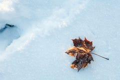Замороженные листья осени клена на снеге с кристаллами морозят Стоковое Фото