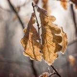 Замороженные листья осени Стоковое фото RF