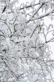 Замороженные листья покрытые с изморозью стоковая фотография rf