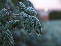 Замороженные листья с небом в предпосылке Стоковые Фото