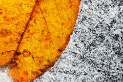 замороженные листья льда Стоковые Фото