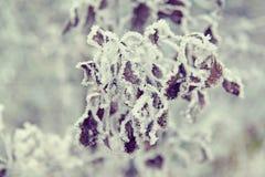 Замороженные листья Стоковые Изображения RF