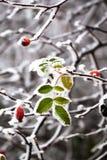 Замороженные листья стоковые изображения