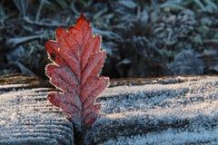 Замороженные листья Стоковая Фотография