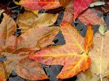 замороженные листья Стоковые Фото