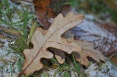 Замороженные лист пляжа Стоковое Изображение