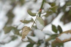 Замороженные лист Стоковые Изображения RF
