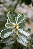 Замороженные лист 1 Стоковое Фото