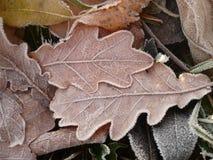 Замороженные контуры Стоковое Фото