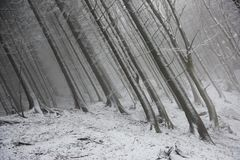 Замороженные лесные деревья во время туманного дня Стоковые Изображения