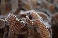 Замороженные листья в зиме Стоковые Фото