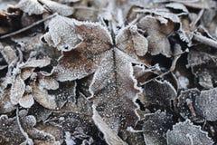 Замороженные лист на земле с льдом на ем стоковое фото
