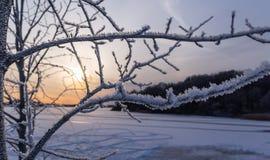 Замороженные озеро и дерево стоковые фотографии rf