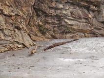 Замороженные пруд и ветви на парке штата утеса смертной казни через повешение Стоковая Фотография RF