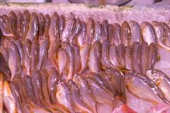 Замороженные рыбы моря Стоковое фото RF