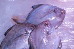 Замороженные рыбы моря Стоковые Изображения