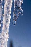 Замороженные сосульки в зиме Стоковое Фото