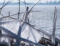 Замороженные тростники в зиме стоковые фото