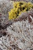 замороженные хворостины Стоковые Фото