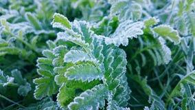 замороженные цветки Стоковые Изображения