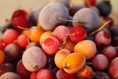 Замороженные ягоды в зиме Стоковая Фотография RF