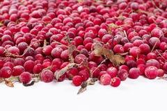 Замороженные cowberries ягоды Стоковое Изображение